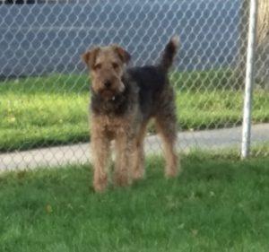 Photo of Brody Full Body