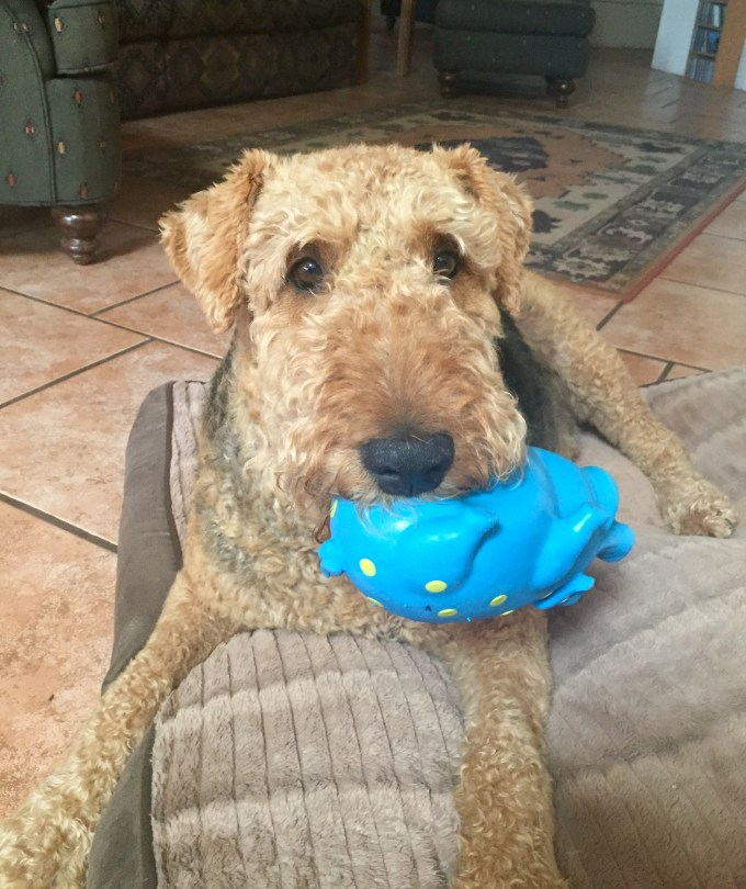 Charlie and his Toy