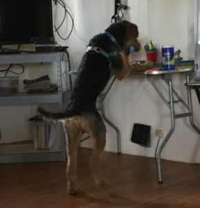 Azzie with Blue Ball on Table