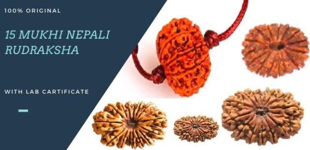15-mukhi-nepali-rudraksha-original