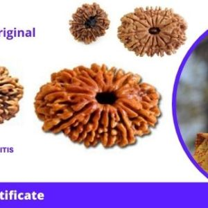 lab-certified-13-mukhi-nepali-rudraksha