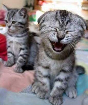 Practice Laughing like a cat ;-)