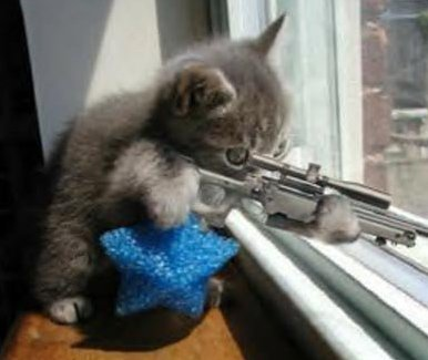 kat op jacht