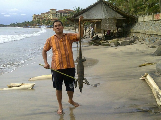 Boyamin Saiman Menangkap Biawak di Pantai Belitung