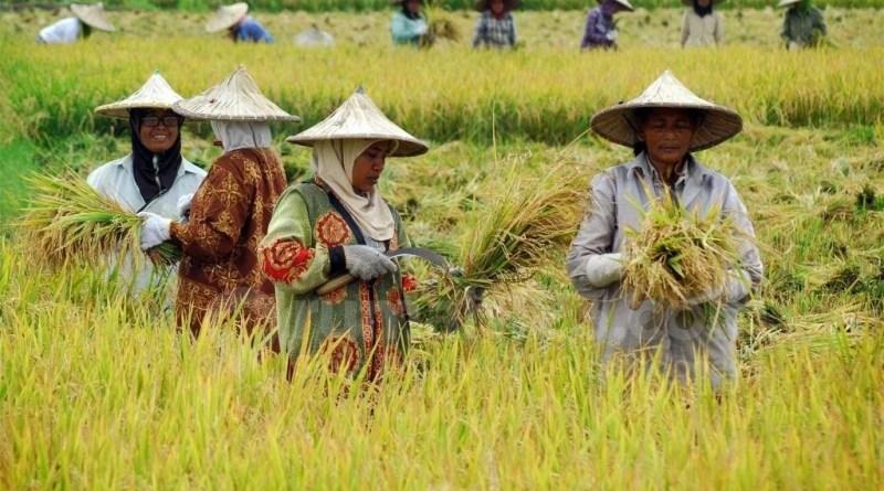 Petani Lokal Korban Kebijakan Impor