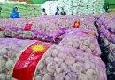 Pasar Global Bawang Putih dan Posisi Indonesia