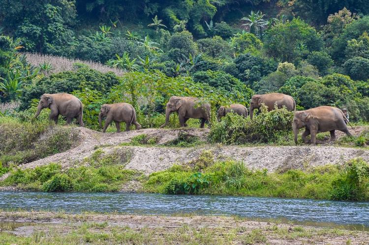 elephant jungle walk