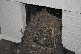 How to Remove Birds Nest From Chimney