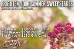 Lehmans.com Brighter Summer Sweepstakes