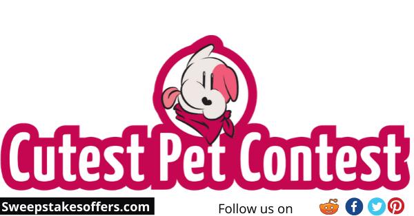 Cherry Insurance Cutest Pet Contest