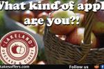 WNEP Lakeland Orchard Apple Quiz Sweepstakes