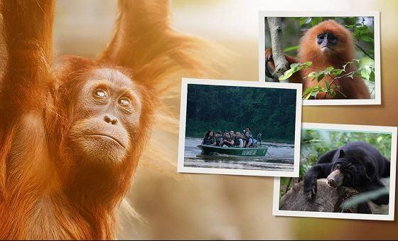 Omaze National Geographic Borneo Sweepstakes