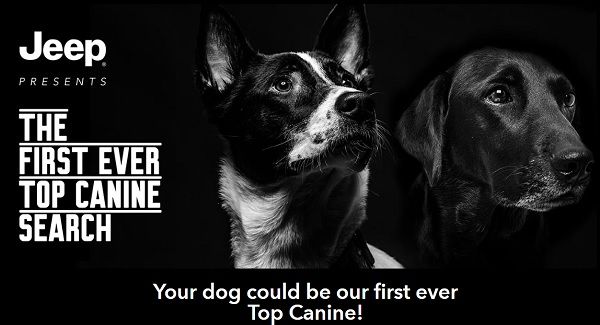 Jeep Brand's Top Canine Search Contest on jeeptopcanine.com