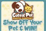 Dayton Daily News Cutest Pet Contest