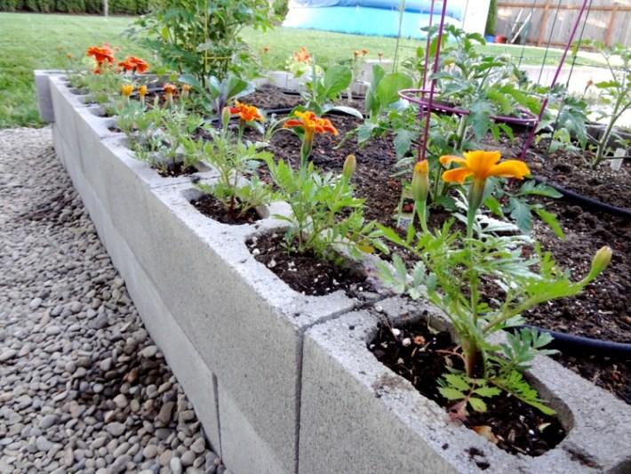 gardenbed3