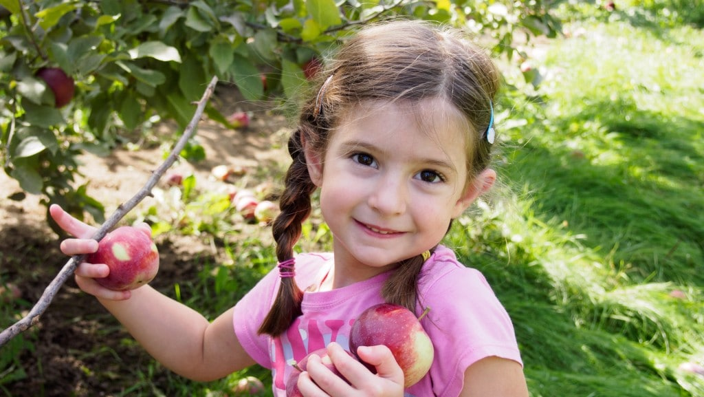 Child picking apples from tree