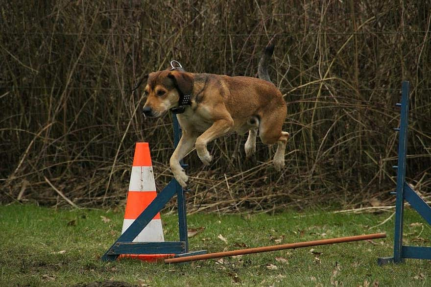 exercise intolerance in dogs