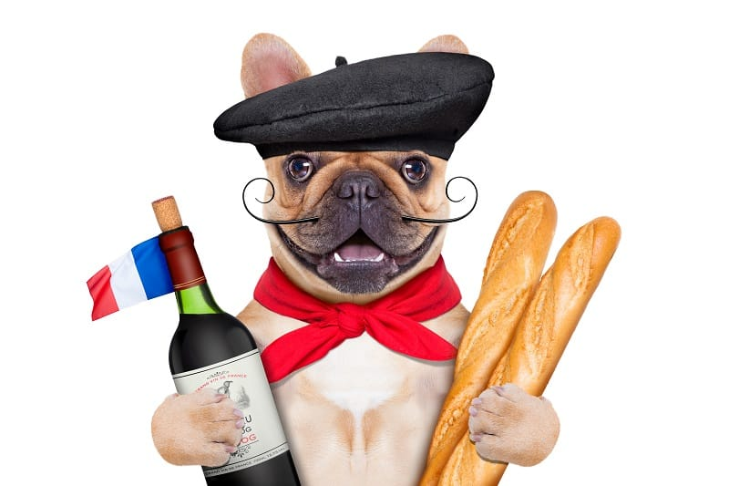 best food for a french bulldog