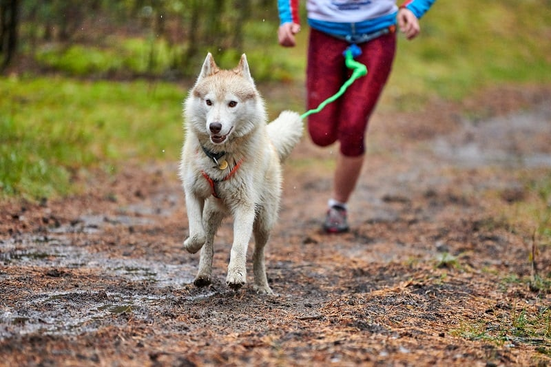 best equipment to run with your dog