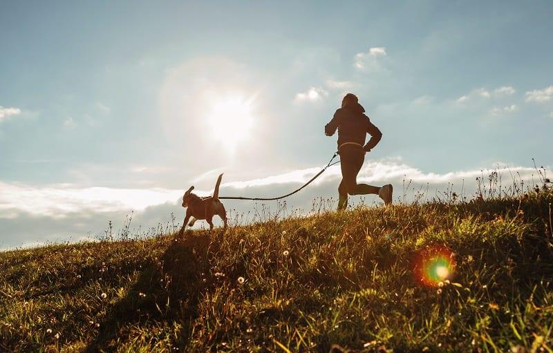 canicross sport activity
