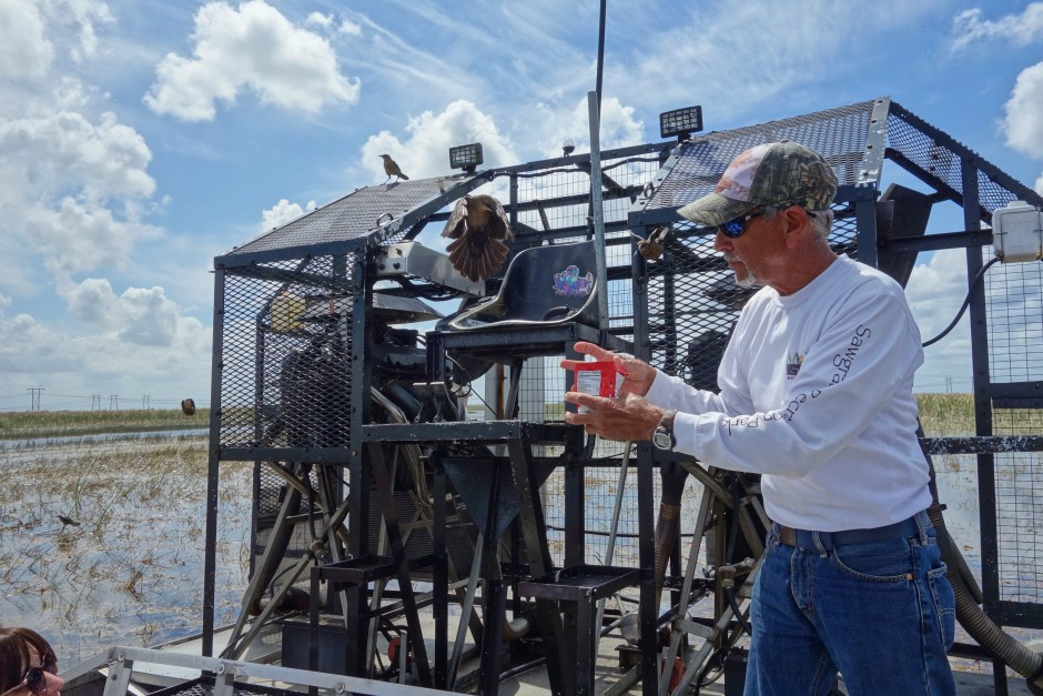 The airboat captain feeding the birds