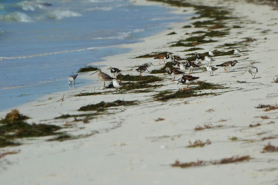 Sea birds at Sandspur Beach