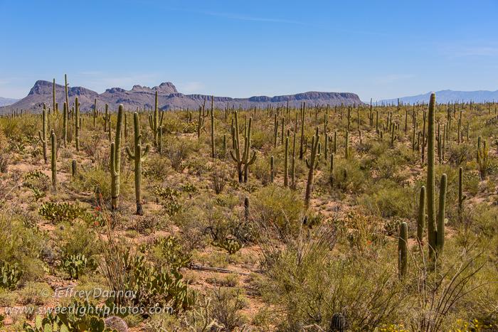 2013-04-07 Saguaro National Park-20