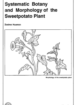 Systematic botany and morphology of the sweetpotato plant