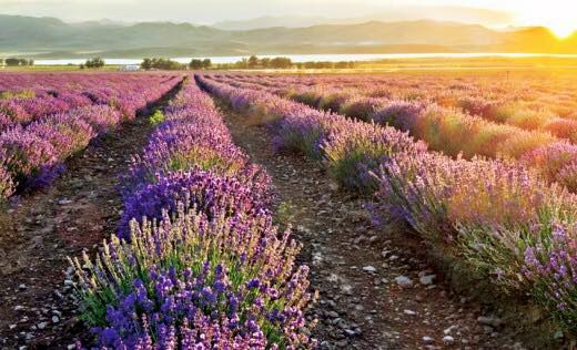 Essential Oils & How They Support Our Family Daily
