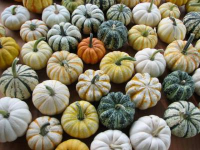 Canning, Cooking, or Jack-o-Lantern? Learn how to select the best pumpkins and gourds with this buying guide. #Canning #Cooking #JackoLantern #Pumpkin #Baking #Food #Halloween #Thanksgiving #Pie #PumpkinPie #Dessert #Shopping #BuyingGuide #HowTo - Miniature