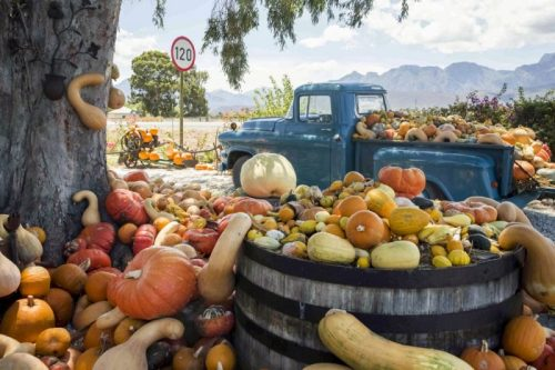 Learn How to Choose the Best Pumpkins and Gourds