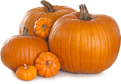 Transparent Pumpkins - How to Choose the Best Pumpkin & Gourds - Legend of Stingy Jack O'Lantern and History of Jack-o-Lantern