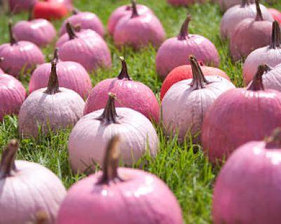 Limited Edition Pink Pumpkin Coffee - Pink Pumpkins
