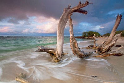 Photowall's Driftwood Sunset Is Awe Inspiring!
