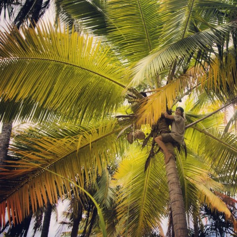 Still crazy about coconuts!