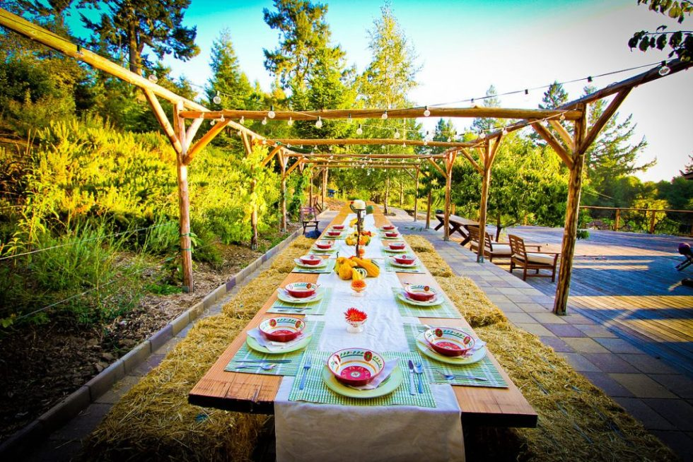 Surround yourself in Nature at Lotus Feed