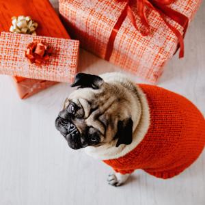 dog and presents for Christmas
