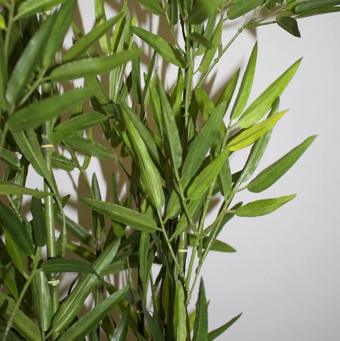 Bambus zielony roślina dekoracyjna
