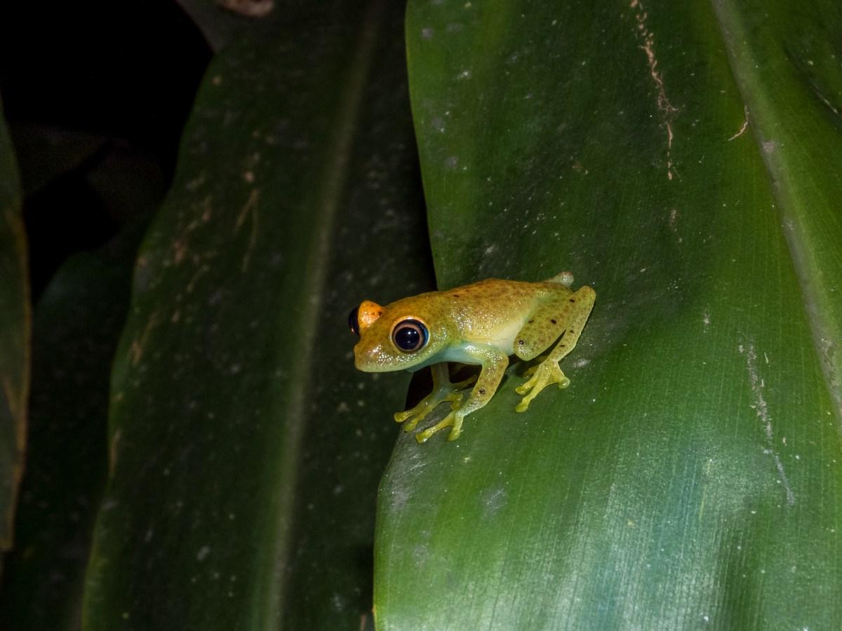 Fauna Madagaskaru, co zobaczysz?