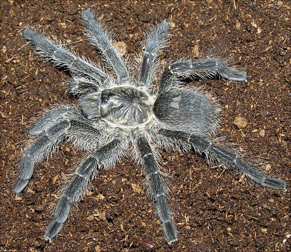 petco tarantula related keywords