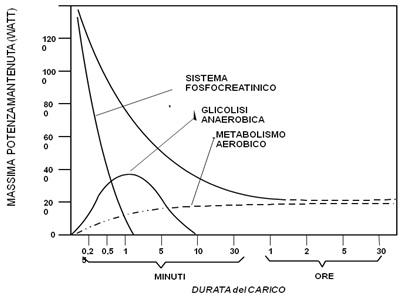Fisiologia dei meccanismi energetici nel nuoto