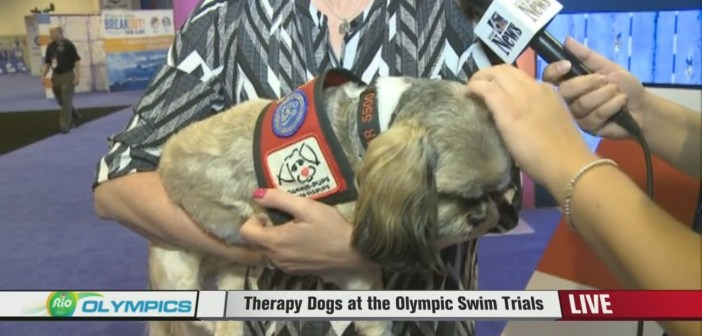 Therapy Dogs At Olympic Swimming Trials In Nebraska Sound Like The Best Way To Calm Your Nerves Eve