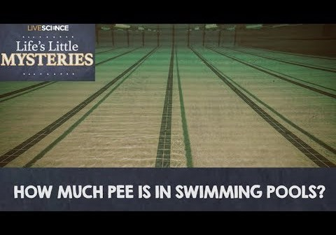 How much pee is in swimming pools swimmer 39 s daily for How much is an olympic swimming pool