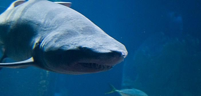 Swimmer dies after shark bites off penis