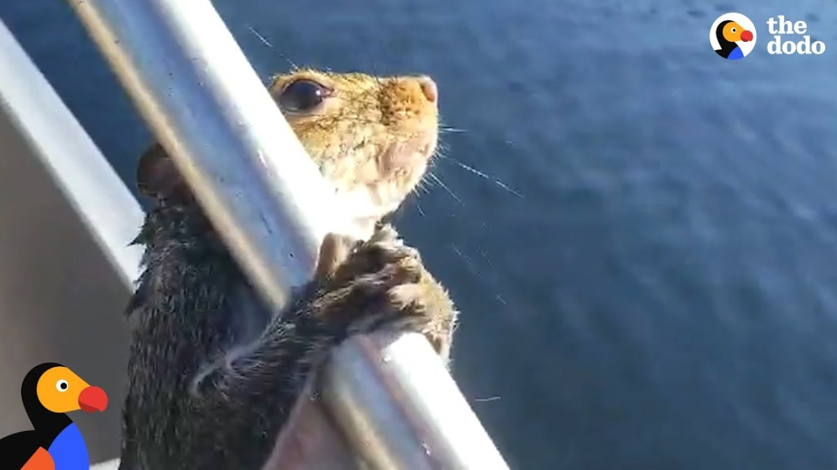 Guy Helps Squirrel Trying To Swim In Lake | The Dodo