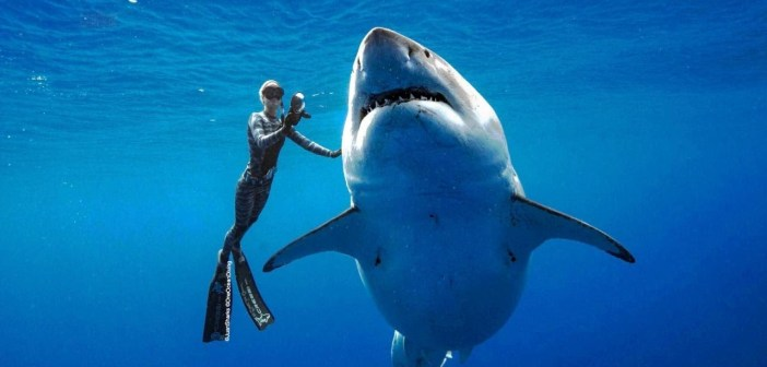 Diver swims with 20-foot great white shark