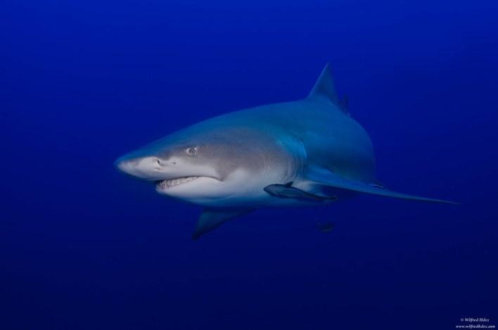 shark sign australia photo