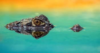 amphibian animal close up color