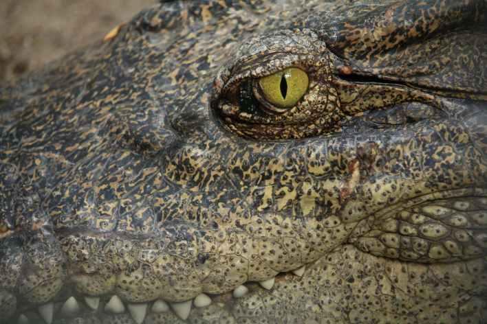 animal zoo head lizard