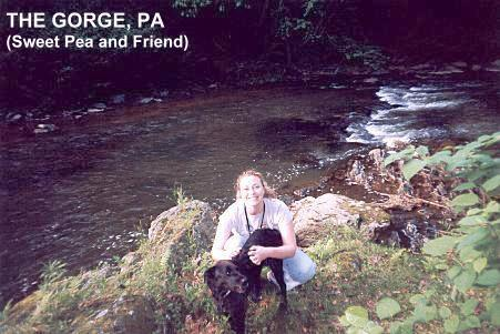 SwimmingHolesinfo Pennsylvania Swimming Holes and Hot Springs rivers creek springs falls hiking